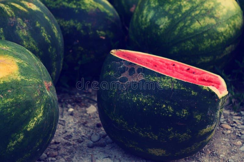 Wathermelon 免版税库存图片