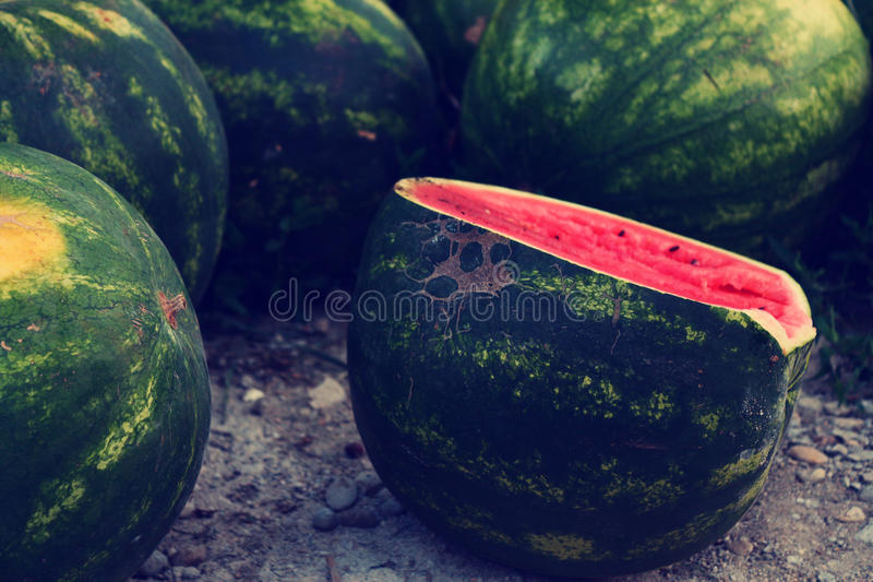 Wathermelon royalty free stock image