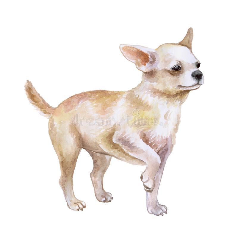 Watrcolor portrait of chihuahua dog royalty free illustration