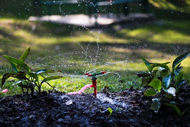 Watre Sparkling. Water sparkling water sparkling nature beautiful photography photographer framenepal rajeshkhatri flower shutter photos sparkle leaf landscape stock images