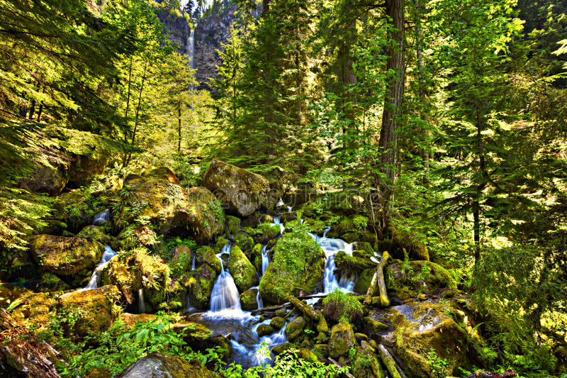 Watson Falls. Watson River cascades through Umpqua Forest royalty free stock photography