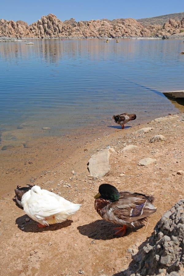 Watson jezioro, prescott, AZ fotografia royalty free