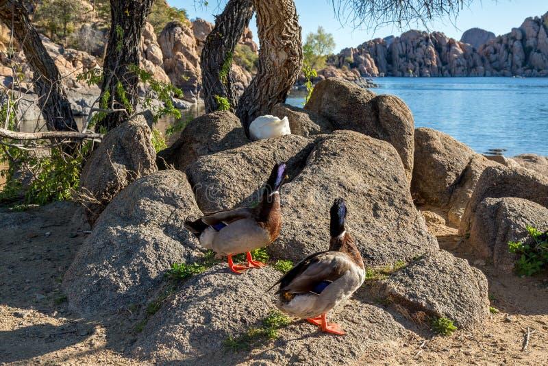 Watson jezioro w prescotcie Arizona zdjęcie stock