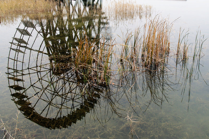 Watter mill inverted image and bulrush stock photo