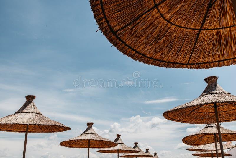 Wattledparaplu's over blauwe hemel royalty-vrije stock foto's