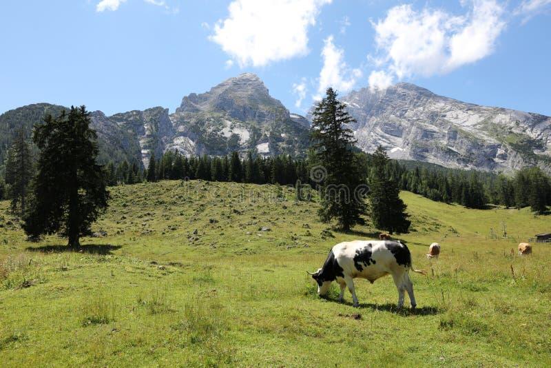 Watzmann mountain peak. National Park Berchtesgadener Land. Bavaria. Germany stock photos