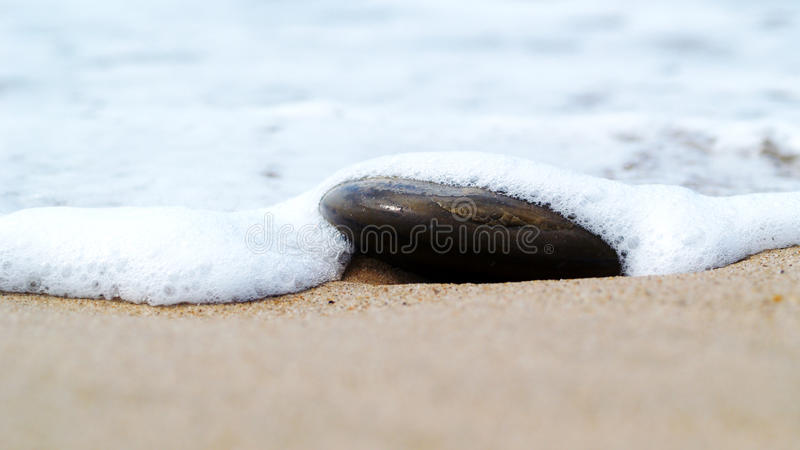 Wave covering stone on beach royalty free stock photos