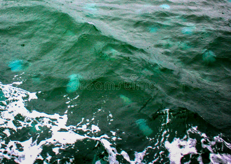 Wave Full of Jelly Blubbers stock photos