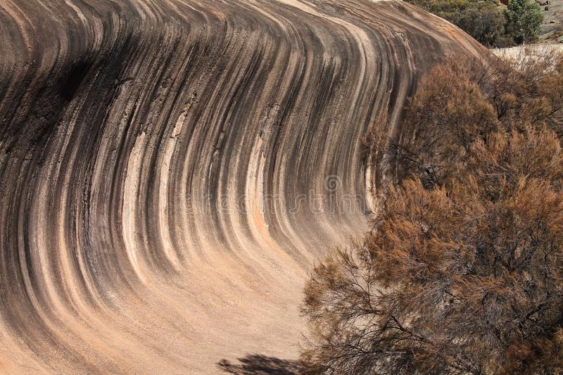Wave Rock in Western Australia with trees royalty free stock image