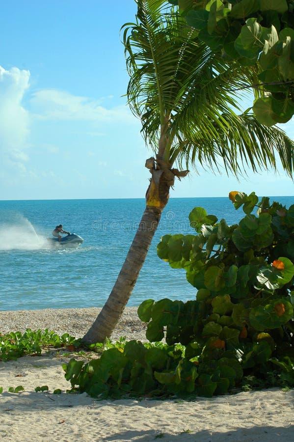 Waverunner de Seadoo com palmeira imagem de stock royalty free