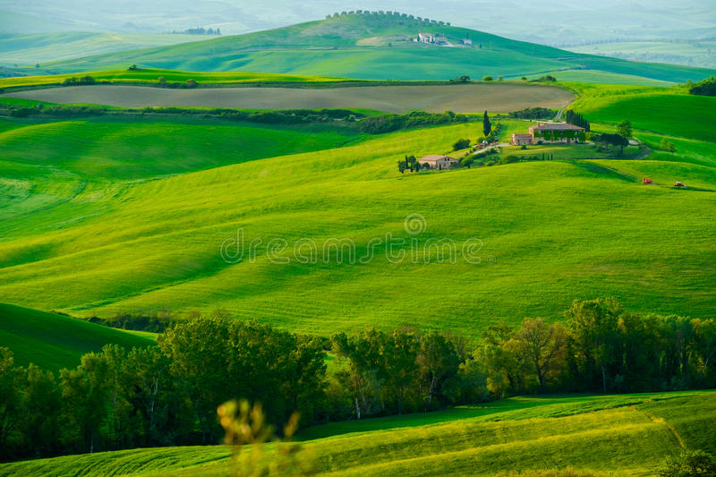 Waves hills, rolling hills, minimalistic landscape. With green fields in the Tuscany. Italy royalty free stock image