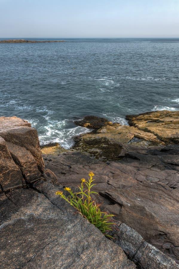 Waves Lap Against Maine Coastline royalty free stock images