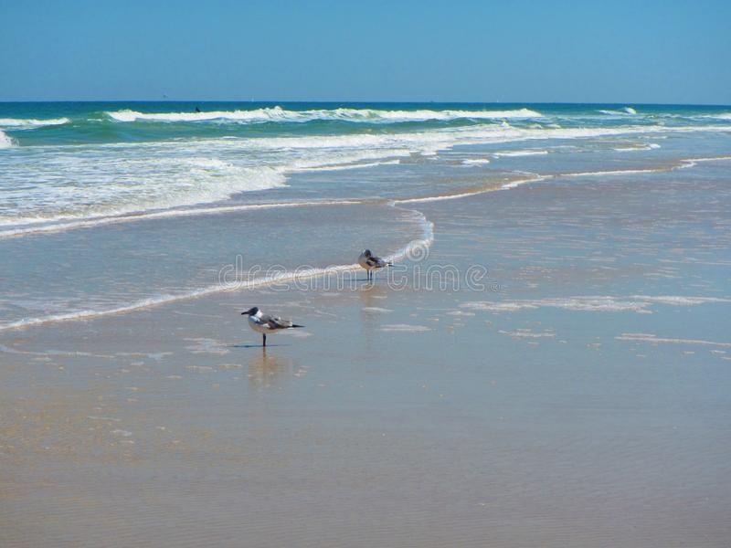 Waves rolling in Daytona Beach, Florida stock images
