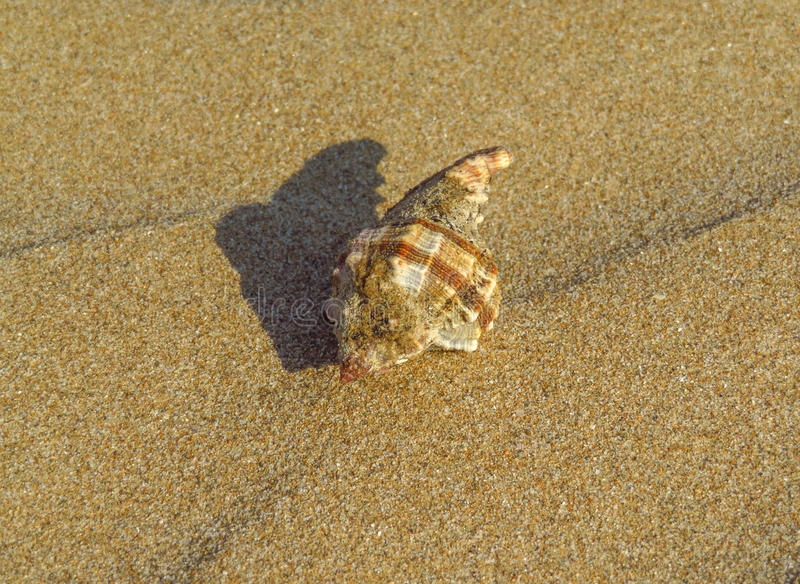 Waves of sand with shell royalty free stock photos