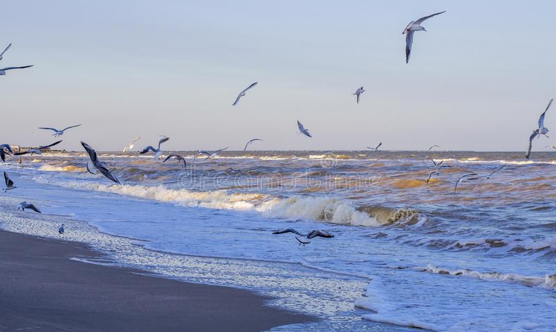 Waves on the sea near the shore. And seagulls stock photo