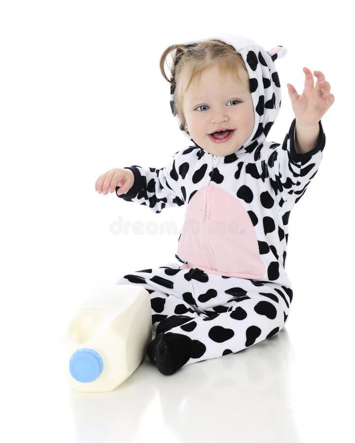 Waving Baby Holstein stock photography