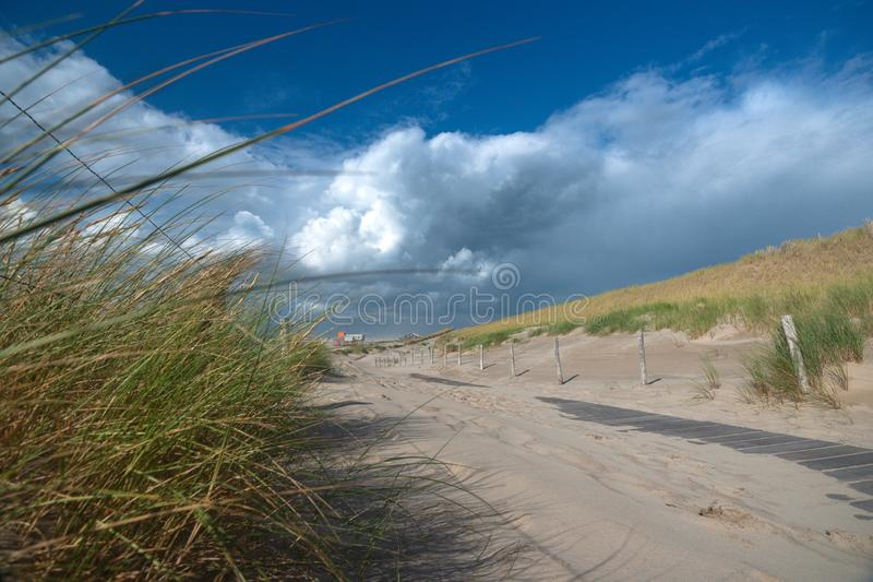 Waving dune grass in the wind with white and gray storm clouds o stock image