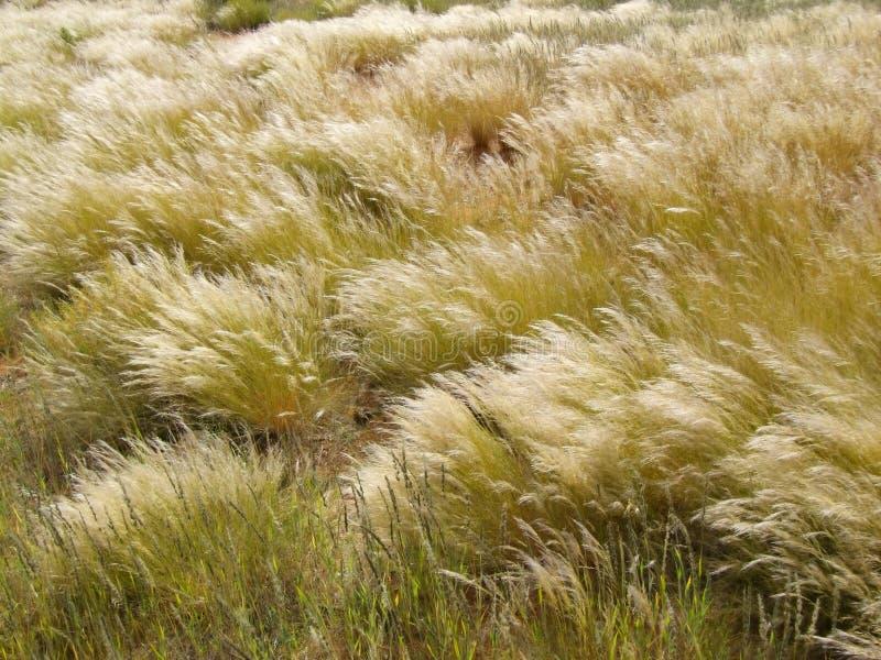 Waving grasses stock image