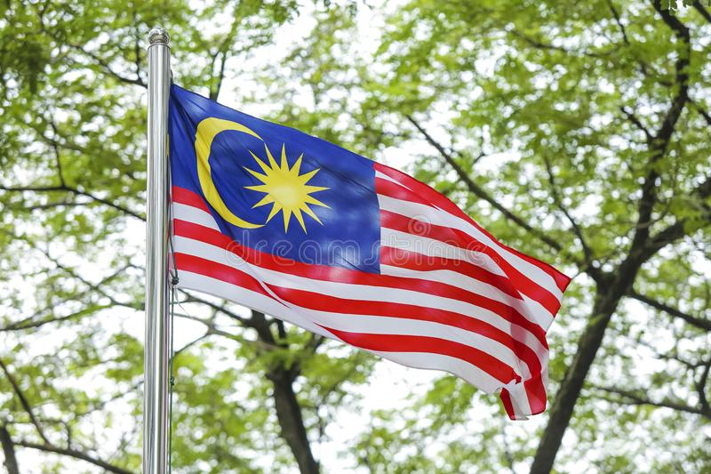 Waving Malaysia Flag, Jalur Gemilang. Malaysia Flag also known as Jalur Gemilang waving with the background of Malaysian rainforest trees. In conjunction of stock image