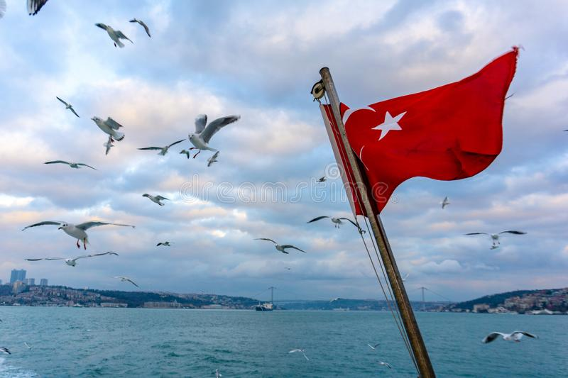 Waving turkish flag over the sea with seagulls flying royalty free stock images