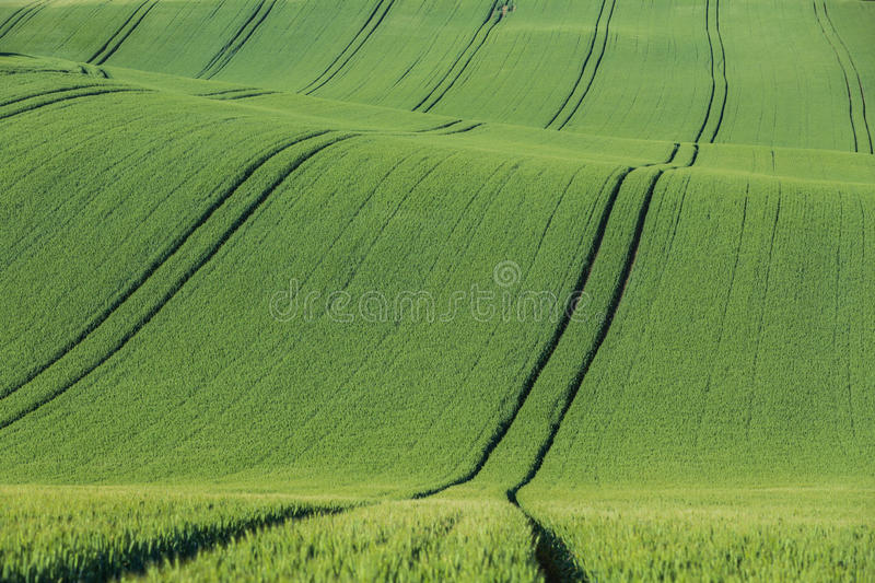 Wavy agricultural field . stock image
