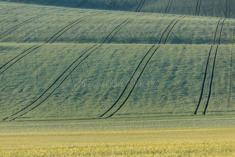 Wavy fairytale landscape . royalty free stock image
