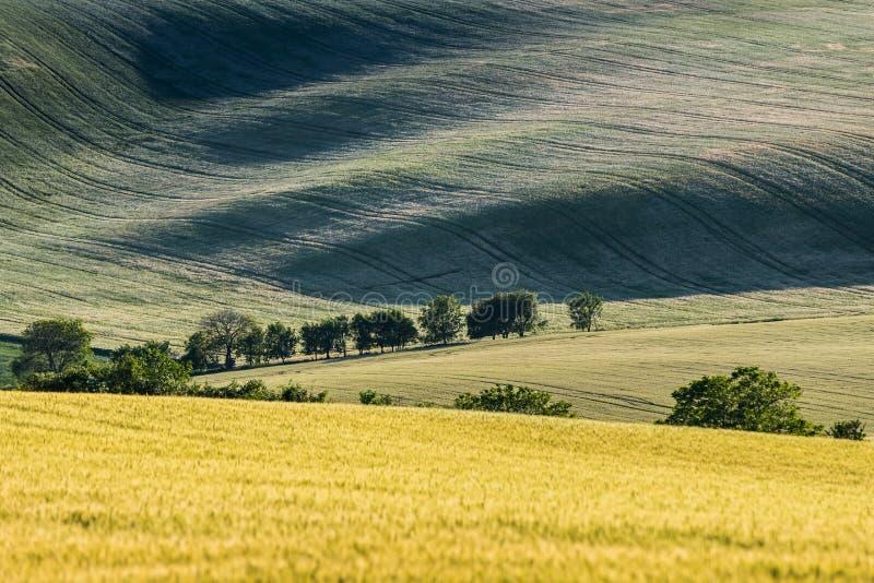 Wavy fairytale landscape . stock photography