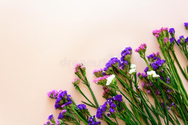 Wavy leaf sea lavender flowers Limonium lined up diagonally in the lower right corner on pink background. Top view. Copy space royalty free stock photography