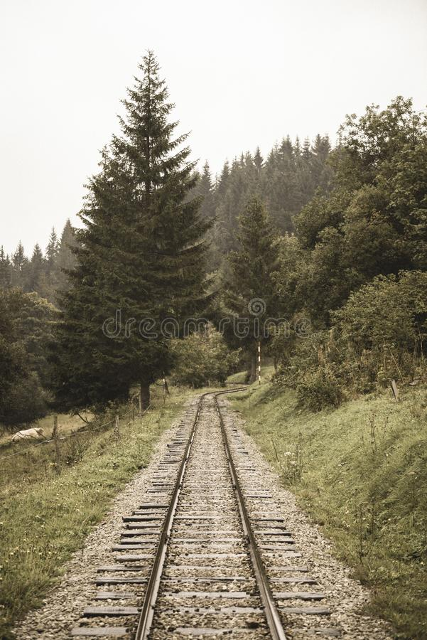 wavy log railway tracks in wet green forest with fresh meadows - vintage retro look stock photo
