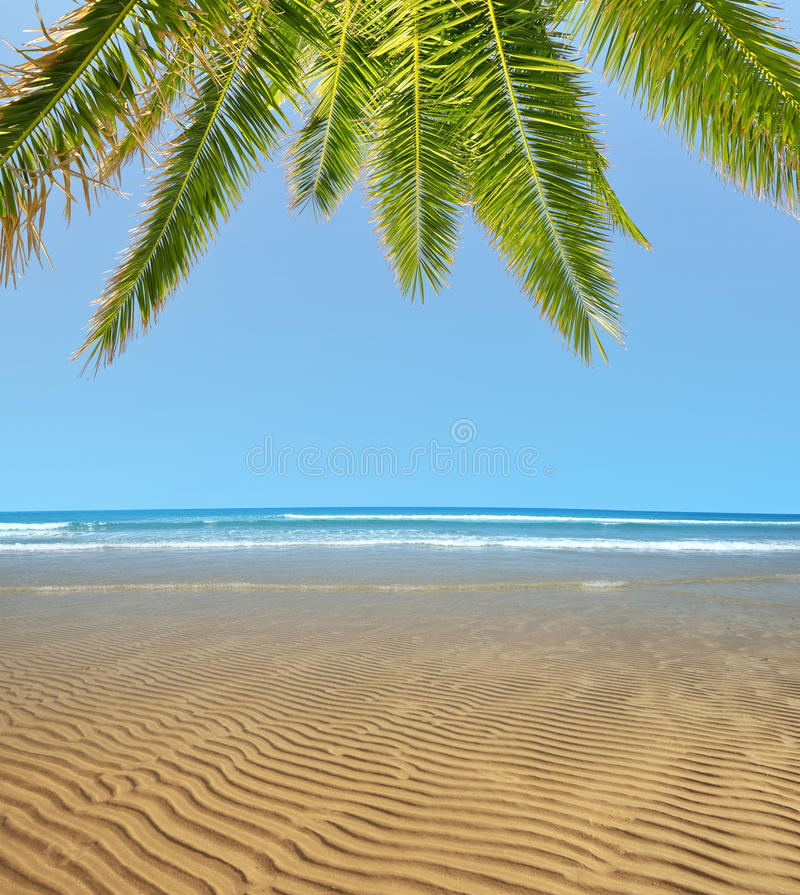 Wavy sandy beach at low tide with palm tree stock images