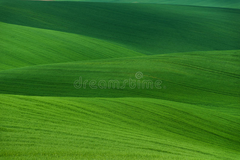 Wavy summer rural landscape in green color. Natural Green Background texture. Green moravian spring undulating fields of crops royalty free stock photos