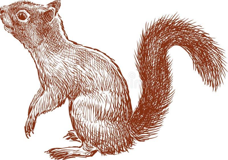 Żwawa wiewiórka ilustracja wektor