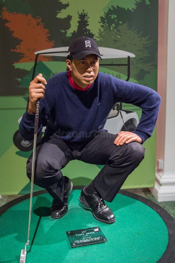 Wax-figuren Tiger Woods, golfspelare arkivbild