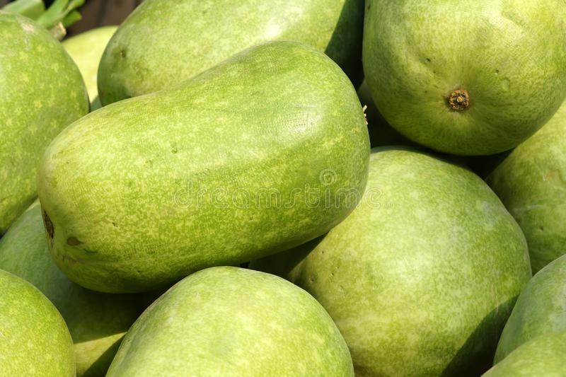 Wax gourd royalty free stock photography
