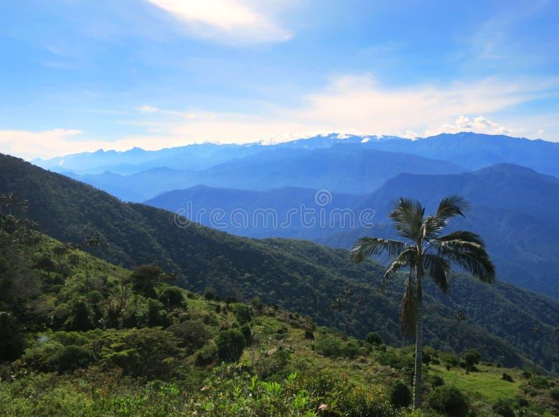 Wax Palm, Sierra Nevada, Santa Marta Mountains, Colombia. Uitzicht op Sierra Nevada, Santa Marta Mountains, Colombia; View on the Sierra Nevada, Santa Marta royalty free stock photo