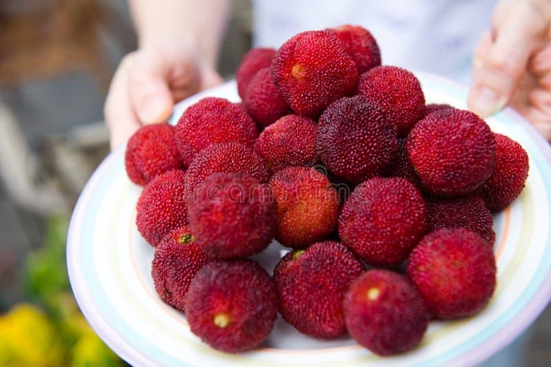 waxberry arkivbild