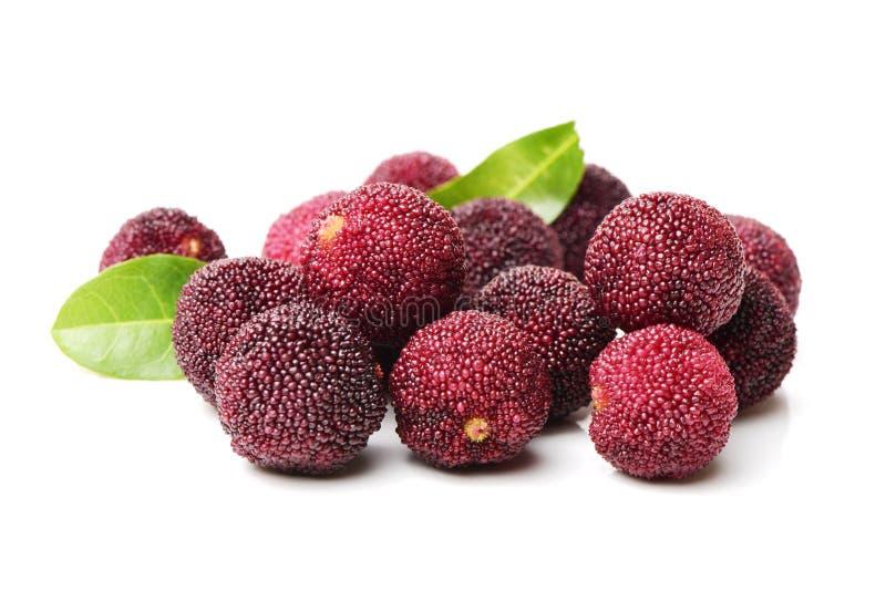 Waxberry eller röd bayberry royaltyfria bilder