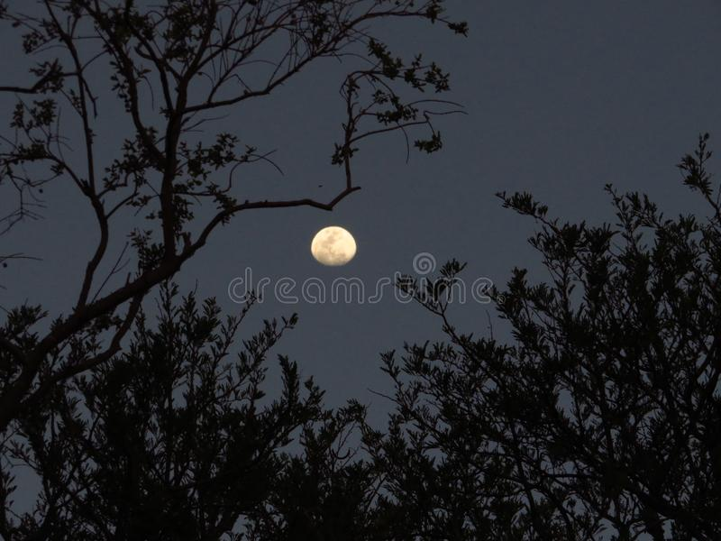 A waxing moon framed by spooky branches. The waxing moon peering through these spooky branches makes for an eerie sight royalty free stock photos