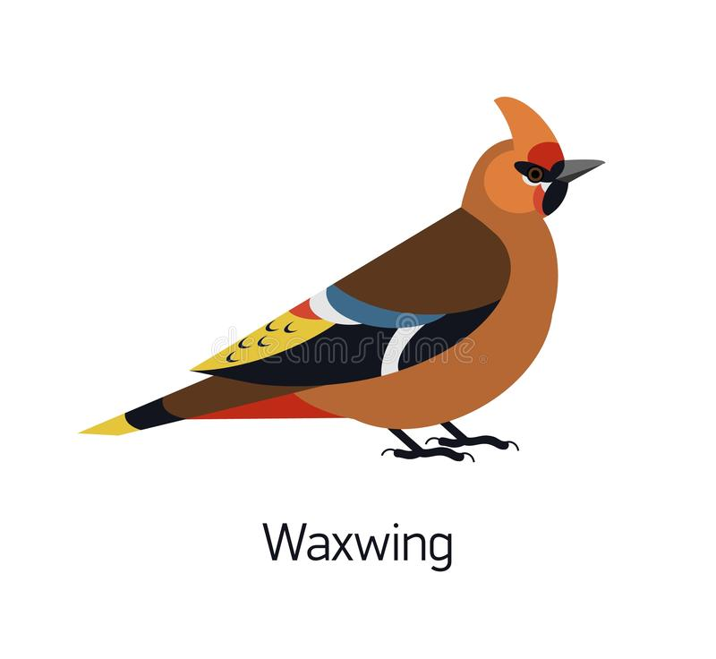 Waxwing aislado en el fondo blanco Pájaro passerine del bosque magnífico, pájaro cantante arbóreo adorable Chirrido lindo aviar stock de ilustración