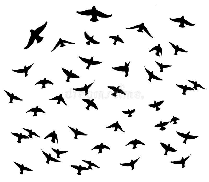 Waxwing bohemio en las siluetas aisladas vuelo stock de ilustración