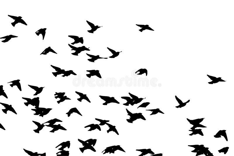 Waxwing bohemio en vuelo Silueta del vector una multitud de pájaros stock de ilustración