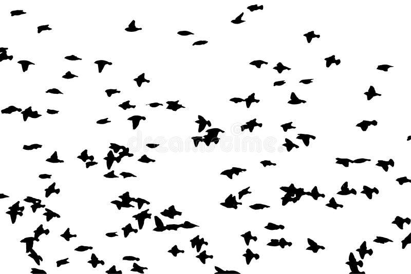 Waxwing bohemio en vuelo Silueta del vector una multitud de pájaros libre illustration