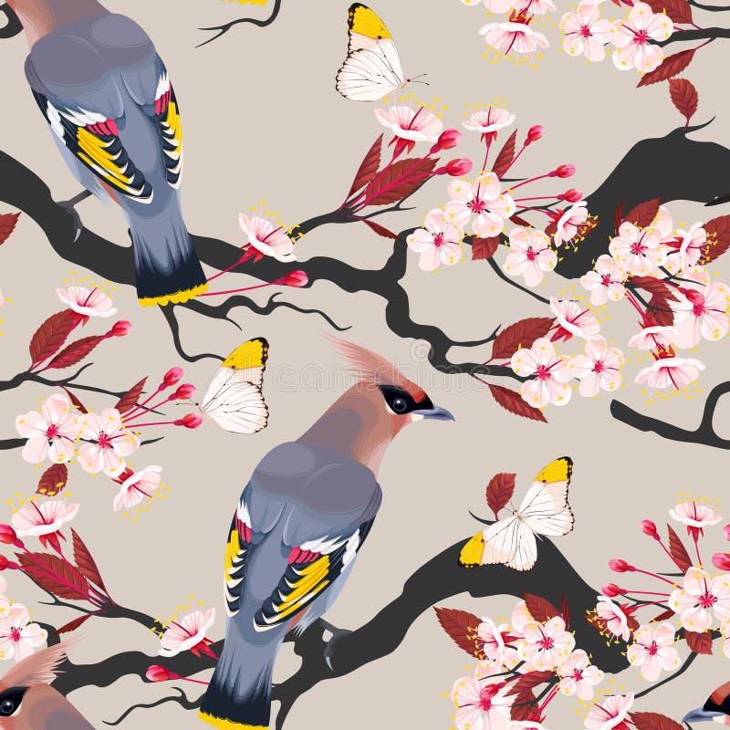 Waxwing en la cereza inconsútil libre illustration