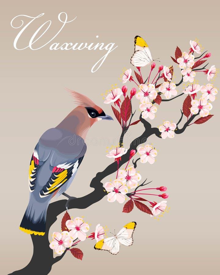 Waxwing en la rama de la cereza stock de ilustración