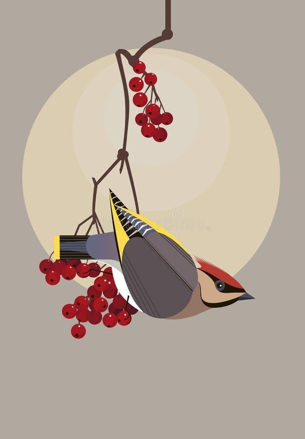 Waxwing en una rama del viburnum libre illustration