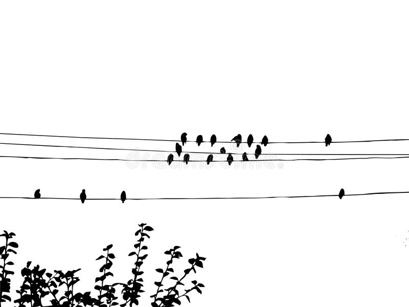 Waxwings on wire royalty free illustration