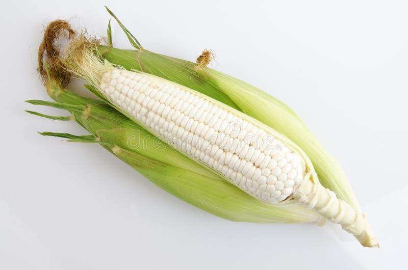 Waxy Corn. Corn native Thailand royalty free stock images