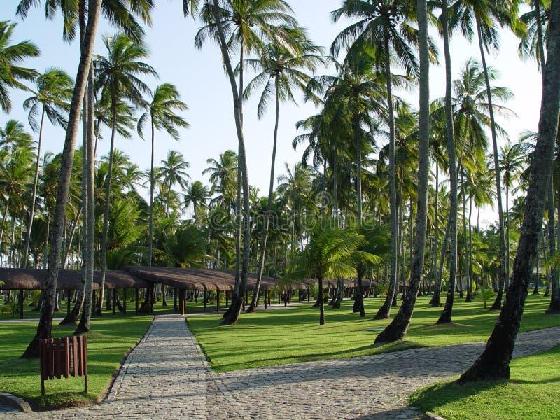 Download Way stock image. Image of floor, backdrop, coconut, grass - 507647