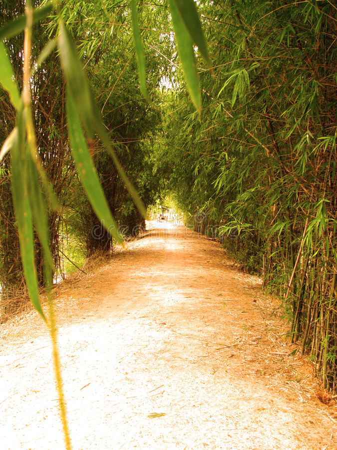 Way of bamboo 7 stock images