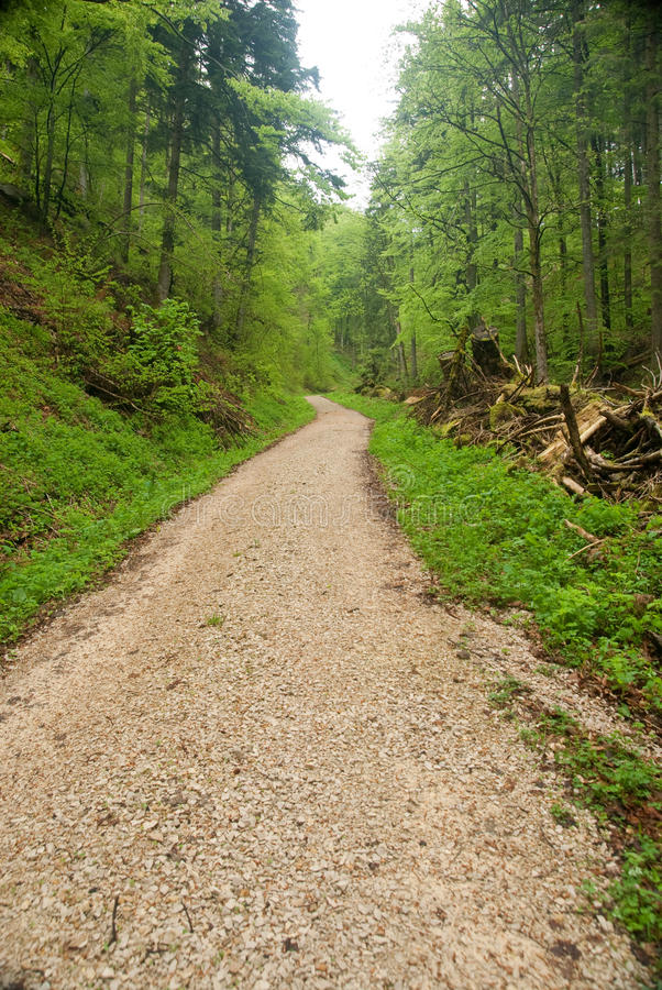 Way In The Black Forest Stock Images